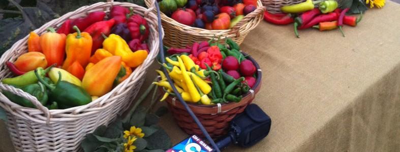 suzies organic csa farm san diego county